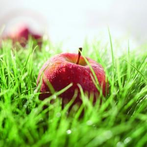 Pomme Ariane, les valeurs nutritionnelles